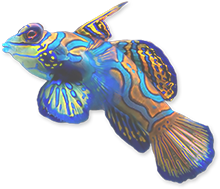 Ultralife reef products   UltraLife has been manufacturing innovative, high-quality products for aquariums and ponds for over 25 years and has become one of the top manufacturers in the industry. Contact us today at 1-800-883-7938.